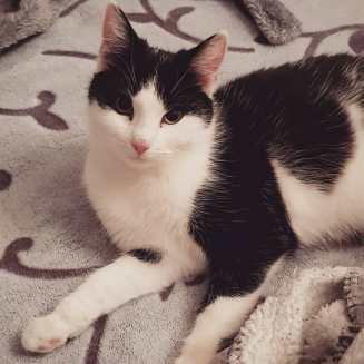 ?? #catstagram #Cats #catsofinstagram #cat #catcontent #catlove